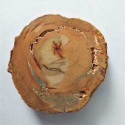 zkamenělé dřevo 41 g