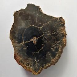 zkamenělé dřevo 49 g